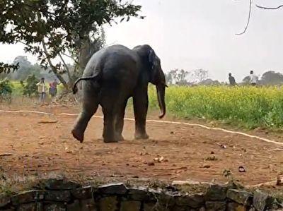 نجات جالب یک فیل از چاه با استفاده از آب