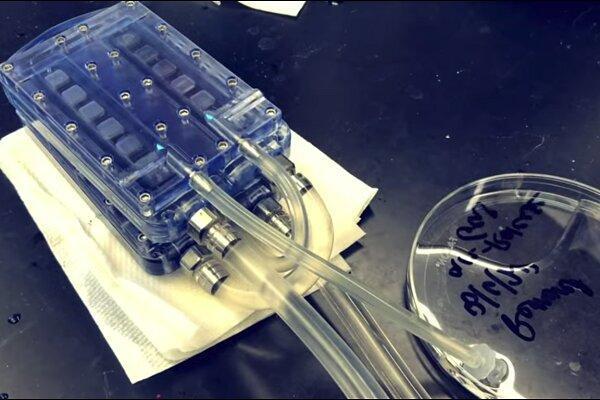 فراوری کلیه زیستی مصنوعی که جایگزین دیالیز می گردد